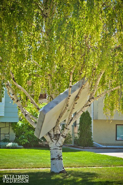 Worst Tree House in Lethbridge