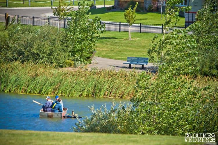 Sunridge Lake, Bos scapes