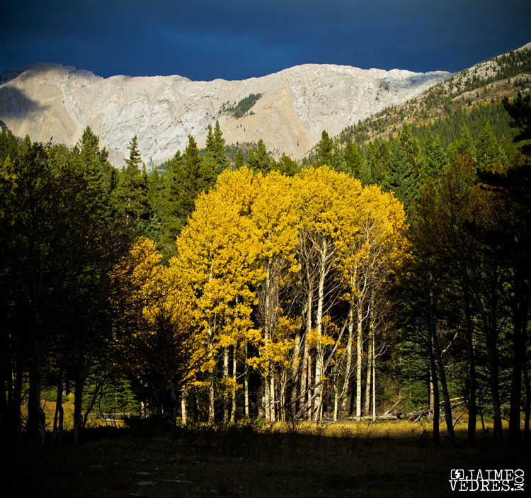 Fall colours in the Crowsnest Pass Alberta