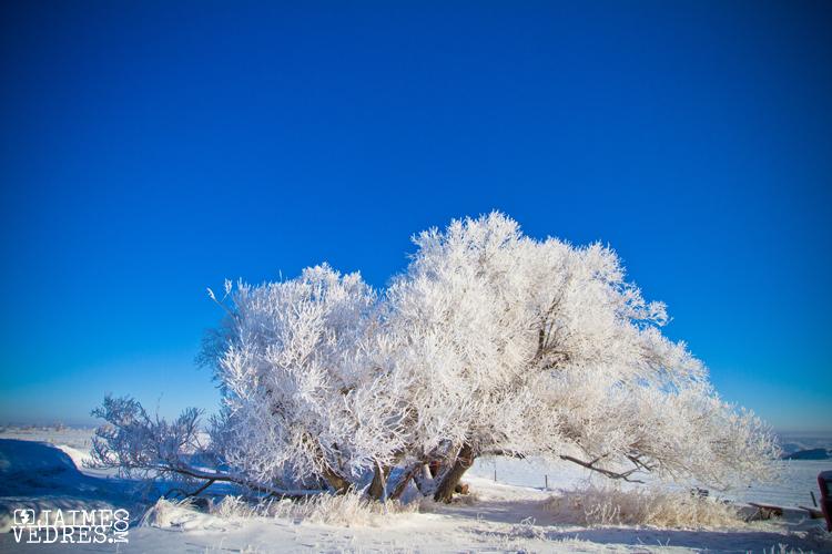 Lethbridge Hoar Frost
