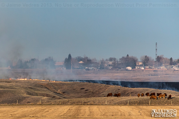 Grass Fire Lethbridge