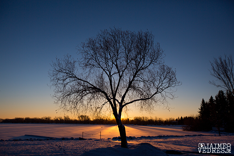 Henderson Lake Tree, Sunrise, Lethbridge