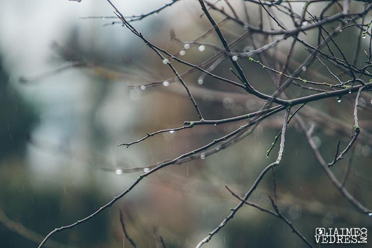 Vancouver Rain 1