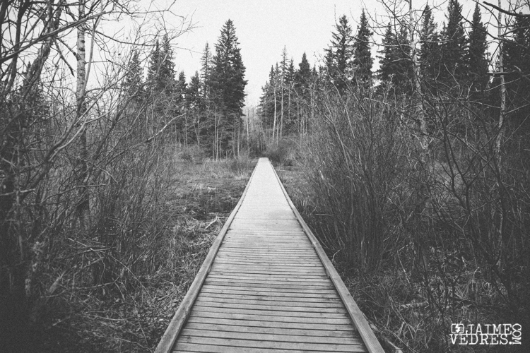 Kananaskis_Boardwalk