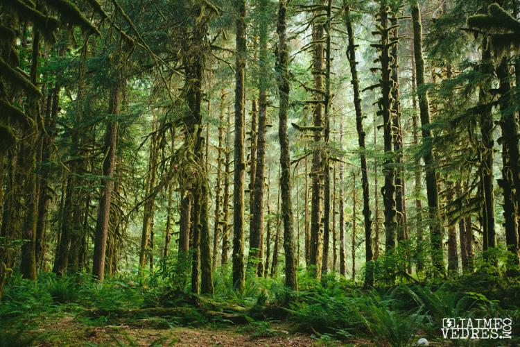 Squamish Forest, BC