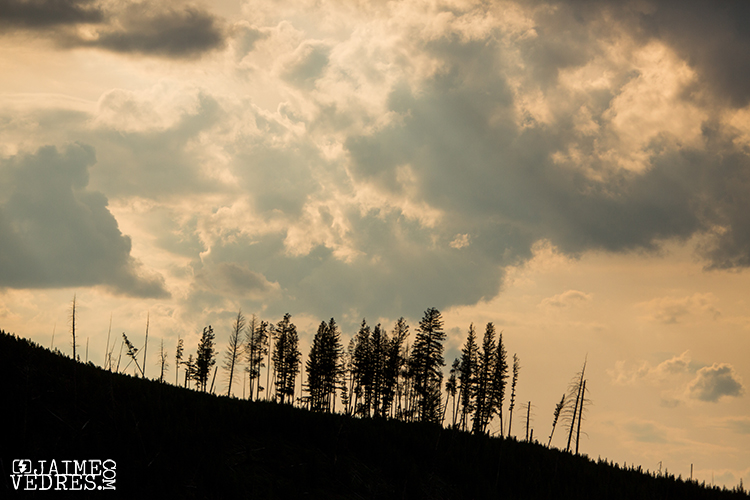 West_Yellowstone_Treeline