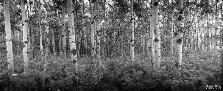 Widelux - Trees