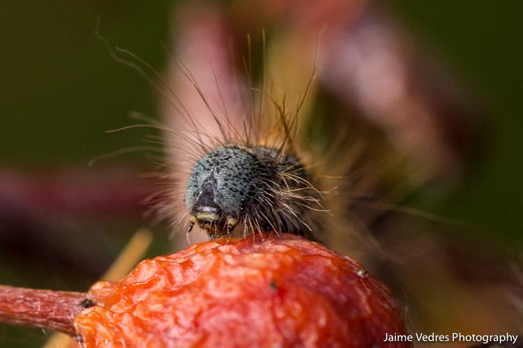 Caterpillars_00002